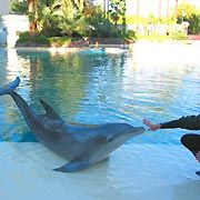 Siegfried and Roy's Secret Garden and Dolphin Habitat, Las Vegas, USA