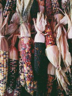 blue corn; melody hansen