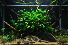 Favourites: lowtech tank by Alejandro Meneses This is about 3 month old and looking beautiful! Enjoy the low tech style!