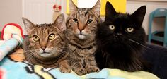 Feral Cats Problem | Best Friends Animal Society