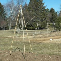 Tutorial: How to build a simple bamboo trellis.   From Organic Gardening