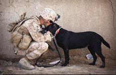 Soldier, Dog, Compan