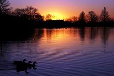 Getting my ducks in a row...