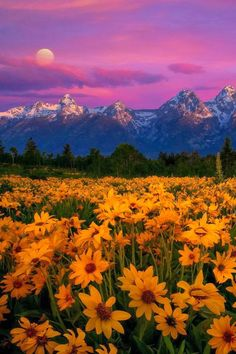 Some highlights of the Grand Teton National Park, Wyoming, USA 20 Stunning Pictures of Nature that will blow your mind Beautiful World, Beautiful Places, Beautiful Pictures, Beautiful Scenery, Grand Teton National Park, National Parks, Dame Nature, Nature Pictures, Pics Of Nature