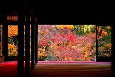 "南禅寺天授庵 ~京都の紅葉 Nanzenji Tenjuan Temple,Autumn leaves/Fall foliage ""Koyo"" in Kyoto,Japan"