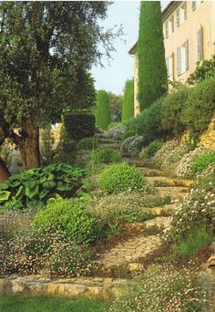 A slow and fragrant ascent up-slope to a century stone house from Provence.Bush morning glory, vittadinia(or erigeron),boxwood,rosemary tumbling over the upper walls and stalwart olive trees and cypresses Provence Garden, Tuscan Garden, Provence Style, Provence France, Hillside Garden, Garden Paths, Dream Garden, Home And Garden, Manor Garden