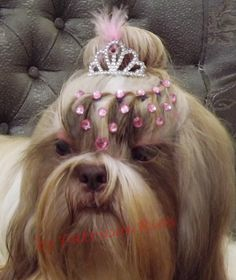 Penteado em cachorro