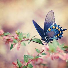 Butterflyyyy. <3