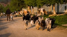 Discover rural Romania in this private Family Tour of Romania by wandering through idyllic villages, hiking to a sheepfold or spending a full day at a farm. Visit Romania, Horseback Riding, Countryside, Wander, Waterfall, Family Bonding, Tours, Exploring, Dip
