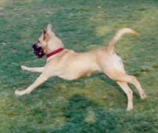 Nunziato Field Dog Park in Somerville MA