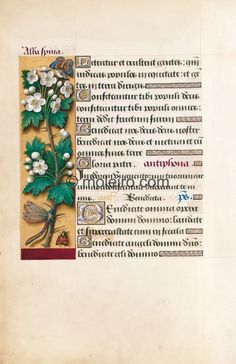 Hawthorn, f. 39v, Great Hours of Anne of Brittany (reproduction from M. Moleiro)