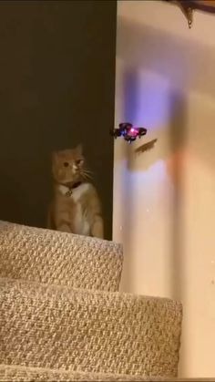 Cute Funny Animals, Cute Baby Animals, Animals And Pets, Cute Cats, Funny Cats, Cute Animal Videos, Cute Animal Pictures, Animal Antics, Animal Memes