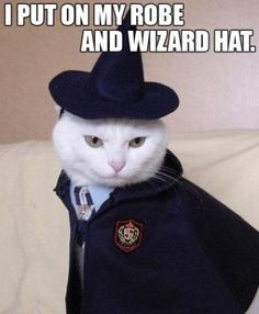 Harry Potter: White Cat in Wizard Hat, Blue Shirt, Tie, and Jacket going to Hogwarts Academy
