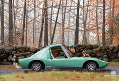 #Squirrel #xoanbaltar #car #green