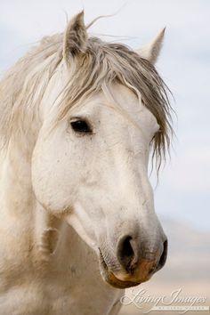 *Wild Horse