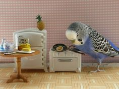 This so cute!  Never thought about buying my parrot it's own easy bake oven.  Lol. Intelligence.