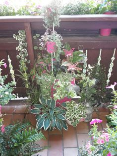 Von der Küche raus auf den Balkon. ...Anfang Juli 2016
