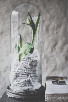 5x inspiratie voor tulpen in het interieur - Roomed