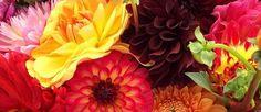 Preserving the Plant Kingdom Preserves, Planting Flowers, Foundation, Seeds, Perfume, Rose, Plants, Roses, Preserving Food