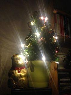 Weihnachten Adventszeit Bäumchen Bär
