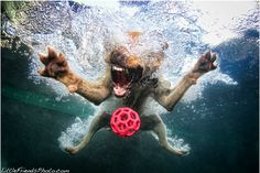 hilarious photos of dogs underwater ~ water boo!