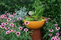 finally, a water garden in the sun!
