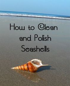 Seashells can be used as accessories in a home, but they must be cleaned properly first.  You must remove all sand, dirt, and other yucky stuff before putting them on display.  Here are the steps for how to clean seashells. Wipe CleanIn...