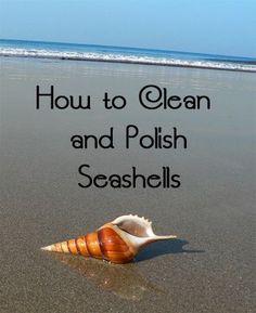How to Clean and Polish Seashells