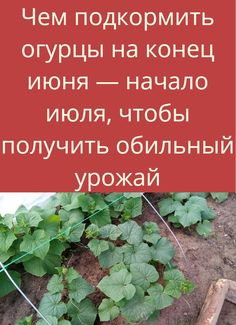 Create A Board, Permaculture Design, My Design, Soda, Garden, Plants, How To Make, Morphe, Kitty