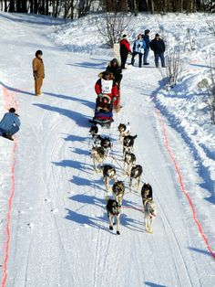 And they are off ~ Iditarod