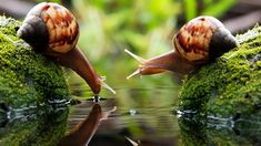 General 1920x1080 snail drink water macro blurred photography algae couple