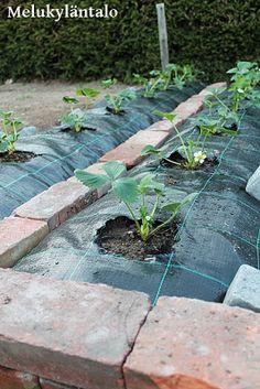 Veg Garden, Vegetable Garden Design, Diy Garden Projects, Raised Garden Beds, Dream Garden, Container Gardening, Backyard, Ideas, Gardens