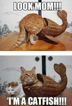 Catfish<< hehehe<<<kitty looks so proud of self