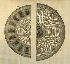 Anatomy of Plants, 1682
