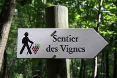 #vignes #vin #oenotourisme #tourisme