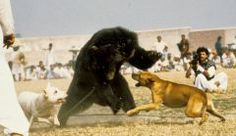 Stop the Barbaric and Medieval 'Sport' of Bear baiting in Pakistan! Animals are not side show attractions, each one has as much of a right to be here as you and me! All About Animals, Animals Of The World, World Animal Protection, Animal Welfare Board, Medical Pictures, Feel Good Stories, Pet News, Aggressive Dog, Puppy Mills