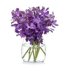 Vanda Orchids, exotic cut flowers available for purchase at Bill's.