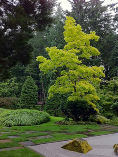 Bloedel Reserve - Bainbridge Island – a short ferry ride from downtown Seattle. Bloedel Reserve – Bainbridge Island – a short ferry ride from downtown Seattle… Bloedel Reserve – Bainbridge Island – a short ferry ride from downtown Seattle… Moss Garden, Garden Trees, Trees To Plant, Landscape Architecture, Landscape Design, Garden Design, Amazing Gardens, Beautiful Gardens, Bainbridge Island