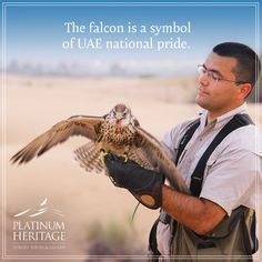 Can you guess why the Falcon was the Bedouin's best friend? Learn more about this symbol of UAE national pride during our private interactive Falconry demonstration. http://fal.cn/K.or