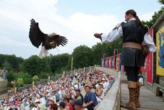The Ball of the Phantom Birds features a ballet of birds swooping low through the ruins of an old castle in an audience participation show featuring owls, falcons, eagles and vultures. Raptors, Week End En Famille, Grand Parc, Château Fort, Spectacle, Vulture, See It, Bald Eagle, Image Search