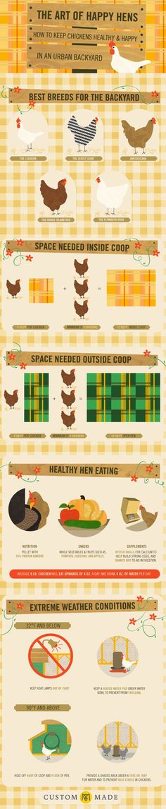 Chicken Coop - Keeping healthy and happy in an urban backyard.- Infographic Building a chicken coop does not have to be tricky nor does it have to set you back a ton of scratch. Easy Chicken Coop, Backyard Chicken Coops, Chicken Coop Plans, Building A Chicken Coop, Backyard Farming, Chickens Backyard, Backyard Coop, Urban Chicken Coop, Urban Chickens