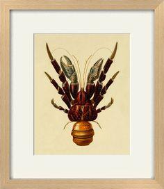 Vintage lobster art print Antique prints by AntiqueBotanicalArt