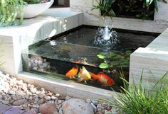 La carpe KOI   Pond, Gardens and Water features