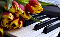 Żółto, Czerwone, Tulipany, Klawisze, Pianino
