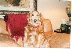 Lucy, part of our Westin Doggie Family!