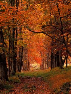 Old Wagon Road from Cades Cove, Tennessee,  Print by Adam Jones