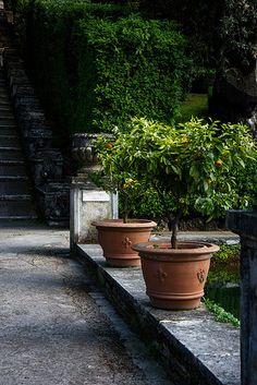 Tivoli - Villa d'Este.