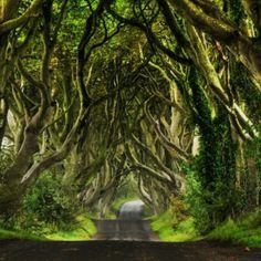 En este túnel entre árboles, conocido como 'The Dark Edges' y situado en Irlanda del Norte, se ha rodado una secuencia de 'Juego de Tronos'