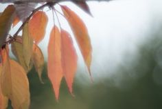 """Check out my art piece """"Autumn Dream"""" on crated.com"""