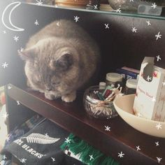 #altar building with mucho #feline interference  #magic #intentions #cat #catsofinstagram #cats_of_instagram #catsofig #catlady #catproblems #acatlikecuriosity #abeautifulmess